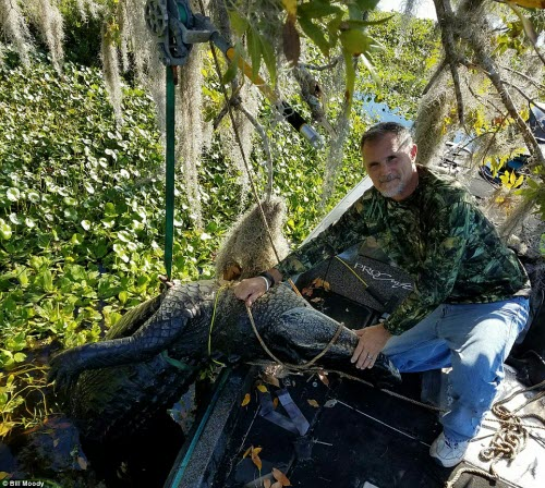 Bắt được cá sấu khổng lồ dài 4m ở Mỹ - 2