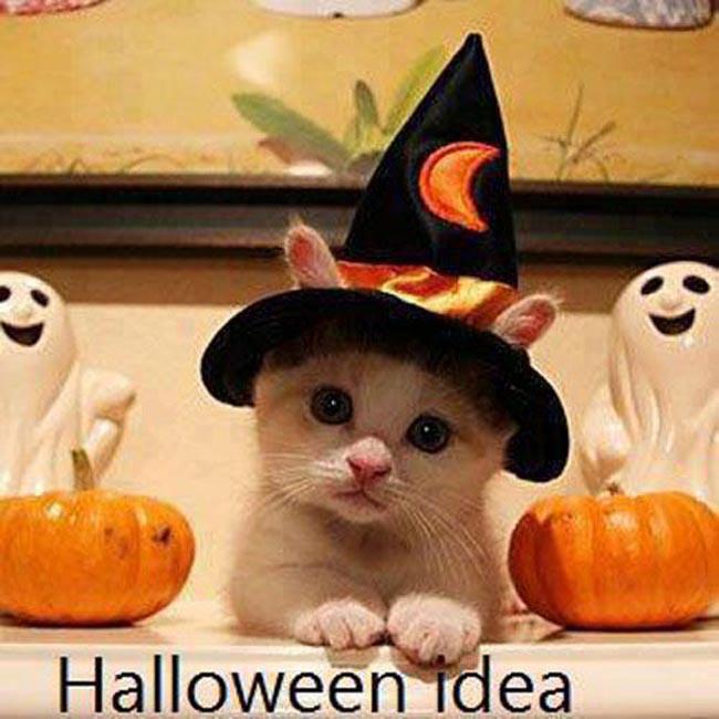 Halloween phải trông cửa hàng bán bí đỏ khồn được đi chơi.