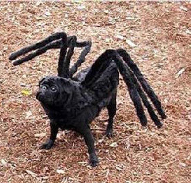 """Hóa thân thành  """" nhện """"  nhiều chân chạy mới nhanh."""