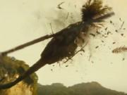 Trực thăng bay qua Vịnh Hạ Long vỡ nát trong siêu phẩm Hollywood