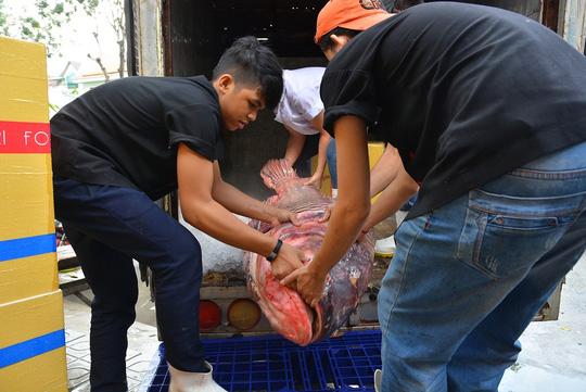 Bỏ hơn 200 triệu để mua cá hô và cá leo khổng lồ - 1