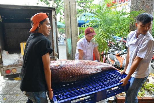 Bỏ hơn 200 triệu để mua cá hô và cá leo khổng lồ - 2
