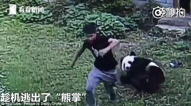TQ: Chiều bạn gái, trèo vào sở thú vật nhau với gấu trúc - 2