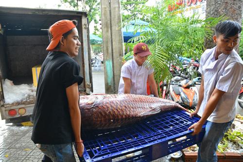 Mua cặp cá quý của sông Mê Kông giá 200 triệu đồng - 2