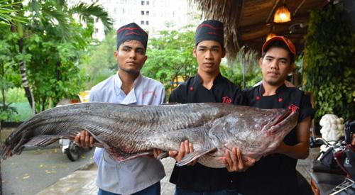 Mua cặp cá quý của sông Mê Kông giá 200 triệu đồng - 1