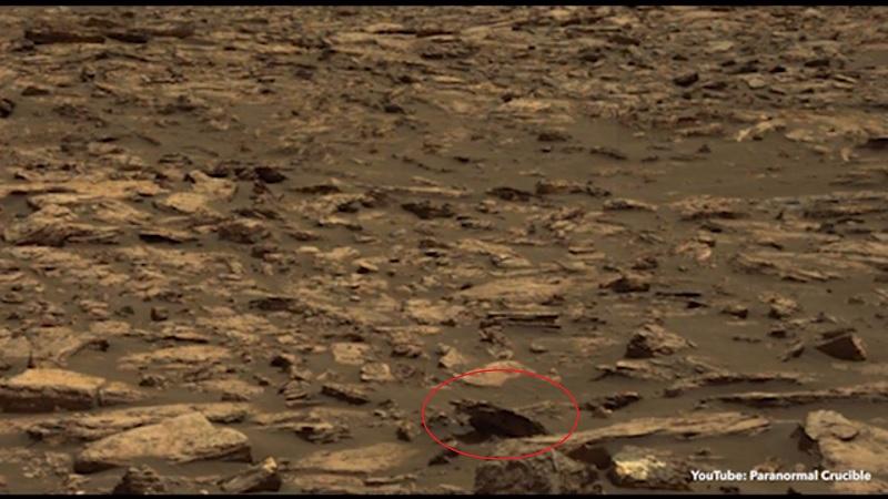 Ảnh của NASA cho thấy xác gấu nâu trên Sao Hỏa? - 1