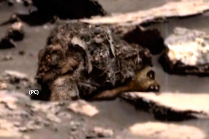 Ảnh của NASA cho thấy xác gấu nâu trên Sao Hỏa? - 2