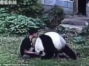 Phi thường - kỳ quặc - TQ: Chiều bạn gái, trèo vào sở thú vật nhau với gấu trúc