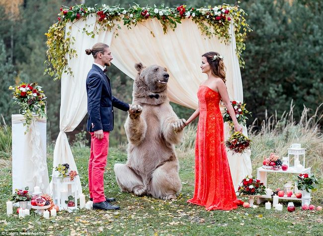 Cặp đôi làm đám cưới cùng gấu nâu nặng gần tạ rưỡi - 1