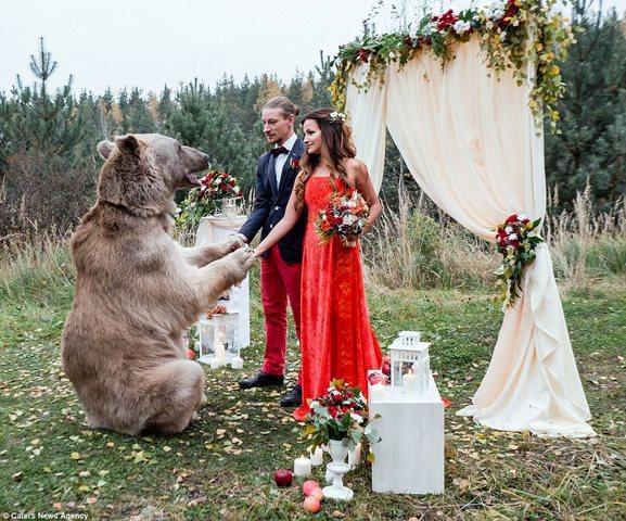 Cặp đôi làm đám cưới cùng gấu nâu nặng gần tạ rưỡi - 3