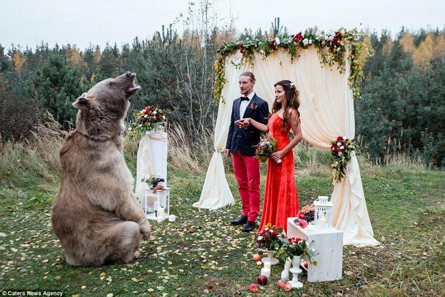 Cặp đôi làm đám cưới cùng gấu nâu nặng gần tạ rưỡi - 7