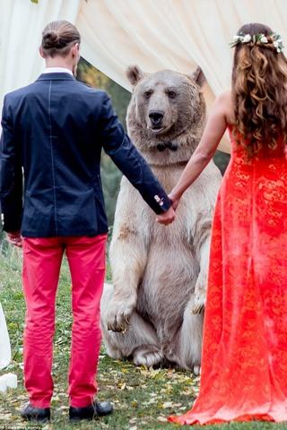 Cặp đôi làm đám cưới cùng gấu nâu nặng gần tạ rưỡi - 8
