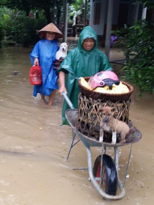 Quảng Bình: Hàng ngàn hộ dân chạy đua tránh lũ - 7