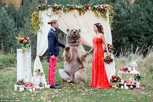 Cặp đôi Nga chụp ảnh cưới cùng gấu nâu khổng lồ - 2