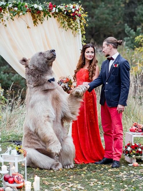 Cặp đôi Nga chụp ảnh cưới cùng gấu nâu khổng lồ - 3