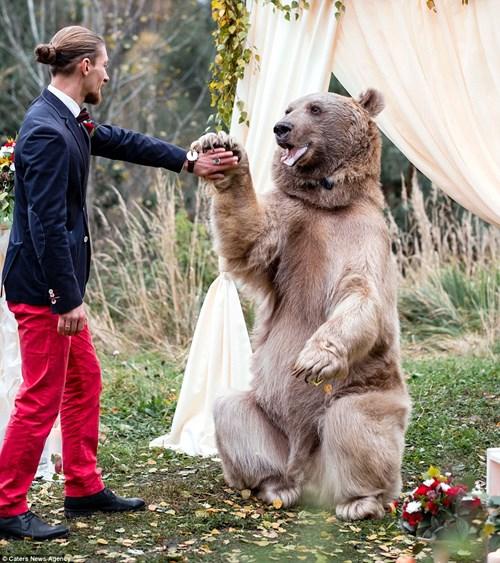 Cặp đôi Nga chụp ảnh cưới cùng gấu nâu khổng lồ - 4
