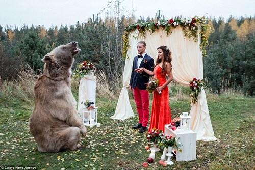 Cặp đôi Nga chụp ảnh cưới cùng gấu nâu khổng lồ - 5