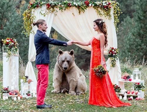 Cặp đôi Nga chụp ảnh cưới cùng gấu nâu khổng lồ - 6