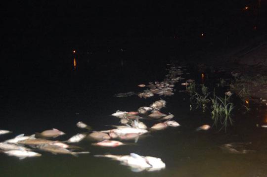 """Cá hồ Linh Đàm chết do """"mưa nắng thất thường"""" - 1"""