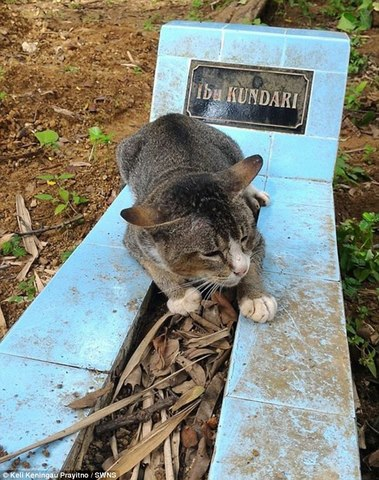 Mèo cả năm nằm trông mộ chủ suốt ngày đêm ở Indonesia - 1