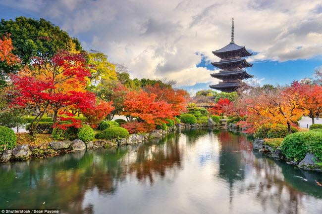 Được xây dựng tại thành phố cổ Kyoto ở Nhật Bản, ngôi chùa Toji trông nguy nga hơn nhờ nằm giữa khu vườn nhiều màu sắc rực rỡ.