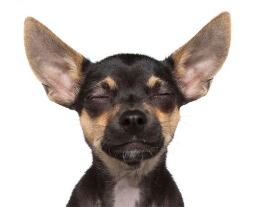 """Đáng yêu với vẻ biểu cảm """"so deep"""" của những chú chó - 3"""