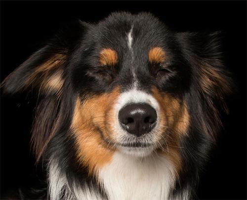 """Đáng yêu với vẻ biểu cảm """"so deep"""" của những chú chó - 7"""