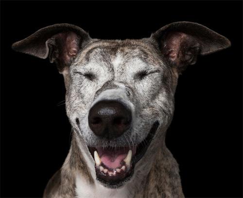 """Đáng yêu với vẻ biểu cảm """"so deep"""" của những chú chó - 10"""