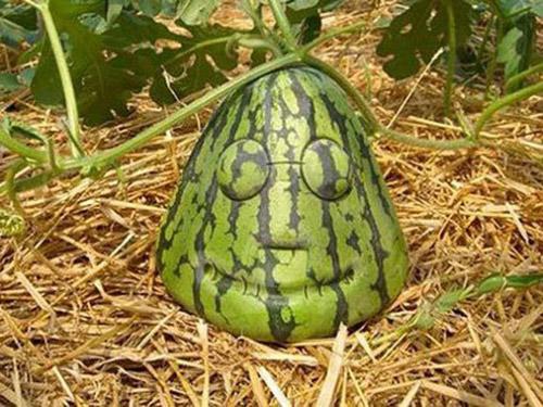 Những củ, quả độc nhất quả đất đã xuất hiện - 5