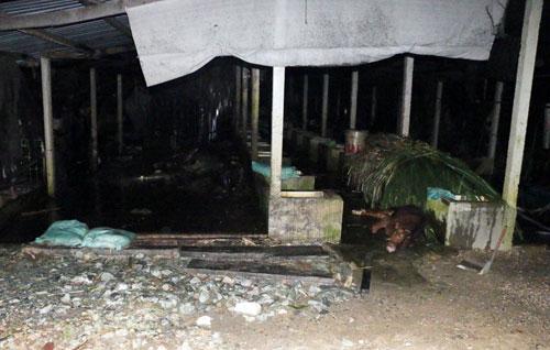 Trại bò sữa ở ngoại ô SG rực lửa sau tiếng nổ chát chúa - 2