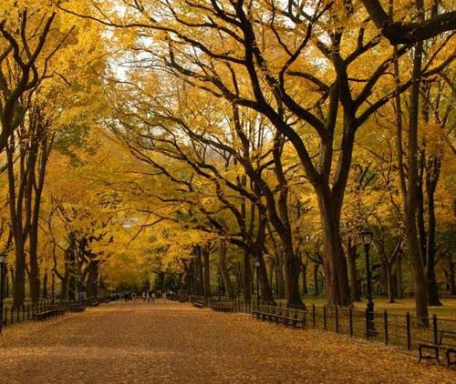 """Những """"thiên đường"""" mùa thu đẹp nhất thế giới - 6"""