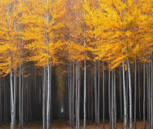 """Những """"thiên đường"""" mùa thu đẹp nhất thế giới - 1"""