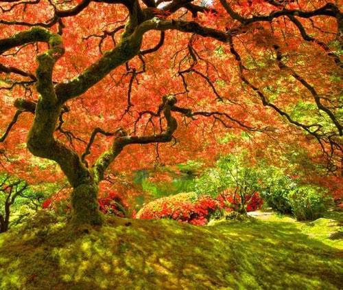 """Những """"thiên đường"""" mùa thu đẹp nhất thế giới - 8"""