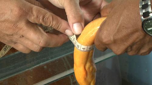 Nông dân miền Tây bắt được lươn vàng, 50 triệu chưa bán - 4