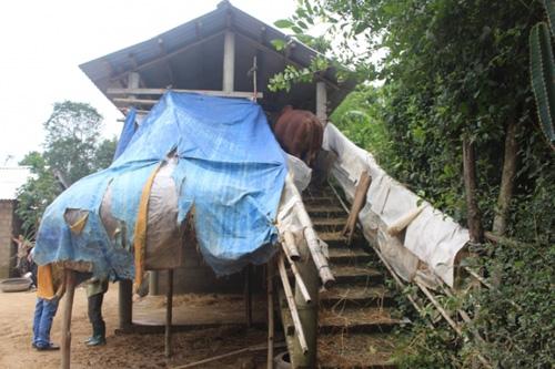 """Xem """"nhà lầu"""" tránh lũ cho trâu bò ở Quảng Trị - 4"""