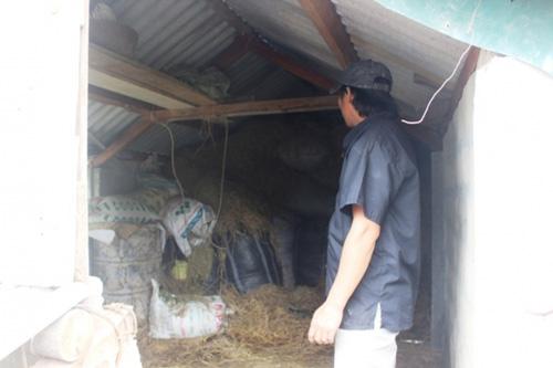 """Xem """"nhà lầu"""" tránh lũ cho trâu bò ở Quảng Trị - 6"""