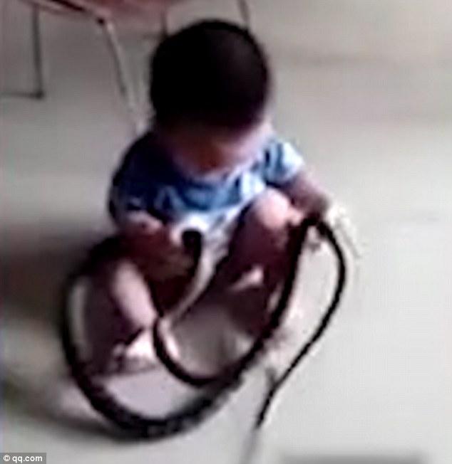 """TQ: Rợn người bé 2 tuổi tóm rắn """"khủng"""" trườn vào nhà - 1"""