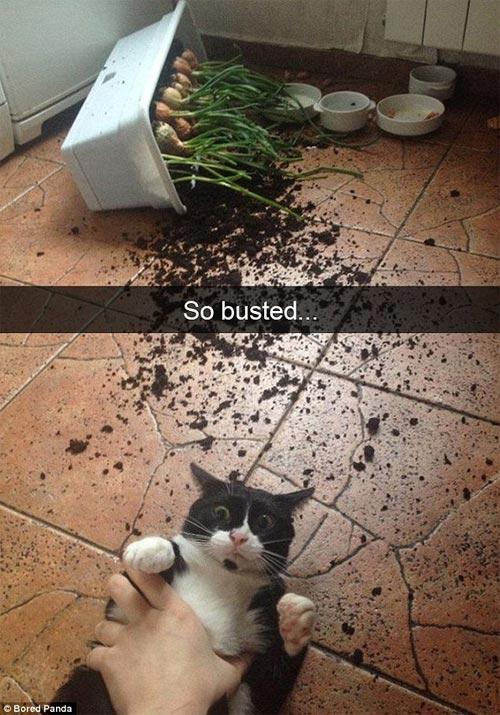 Cười rũ rượi khi mèo bị bắt quả tang phá hoại - 1