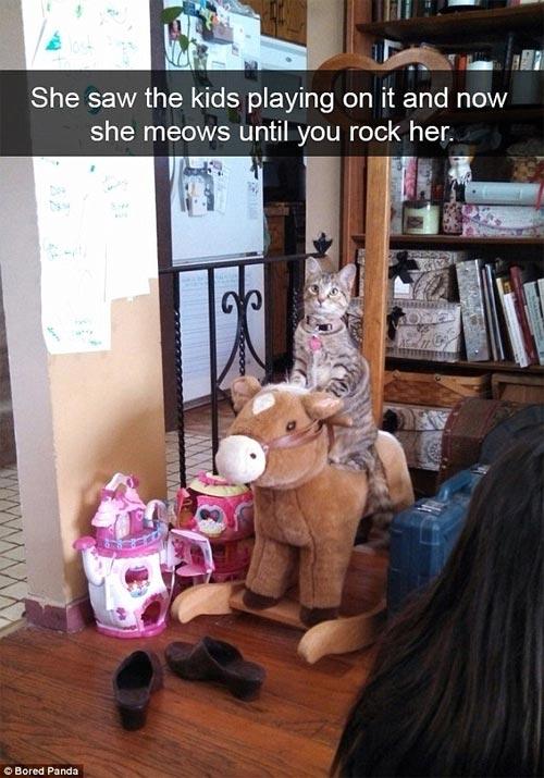Cười rũ rượi khi mèo bị bắt quả tang phá hoại - 2