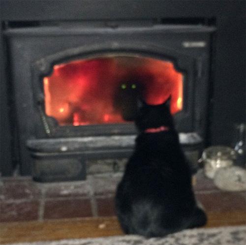 Cười rũ rượi khi mèo bị bắt quả tang phá hoại - 4