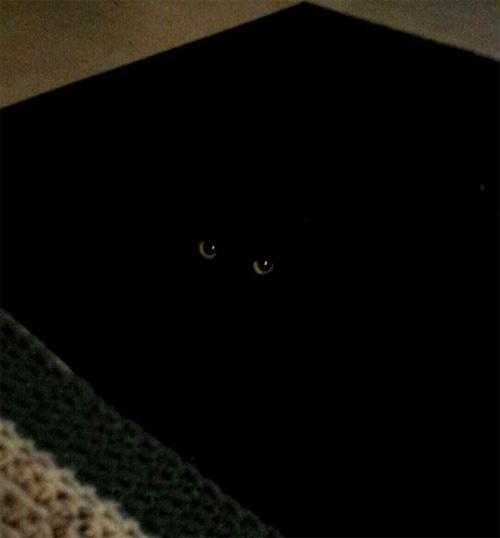 Cười rũ rượi khi mèo bị bắt quả tang phá hoại - 5