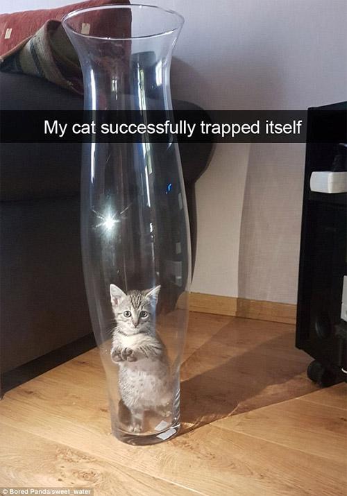 Cười rũ rượi khi mèo bị bắt quả tang phá hoại - 6