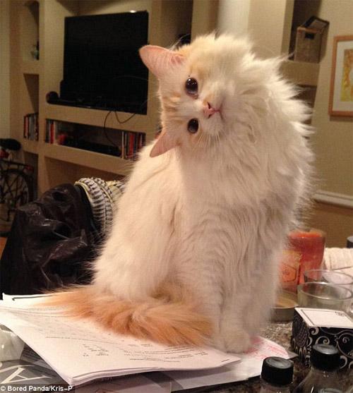 Cười rũ rượi khi mèo bị bắt quả tang phá hoại - 8