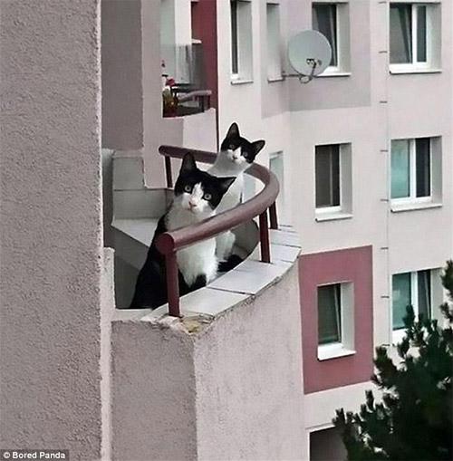 Cười rũ rượi khi mèo bị bắt quả tang phá hoại - 9