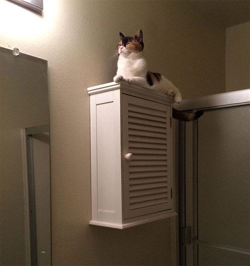 Cười rũ rượi khi mèo bị bắt quả tang phá hoại - 10