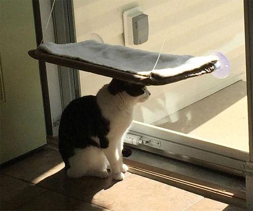 Cười rũ rượi khi mèo bị bắt quả tang phá hoại - 12