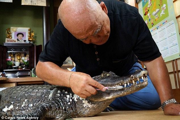 Bầu bạn, ôm ấp cá sấu suốt 34 năm, bỏ bê cả vợ - 5
