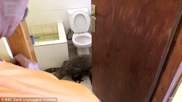 Indonesia: Rồng Komodo khổng lồ ẩn trong phòng khách sạn - 1