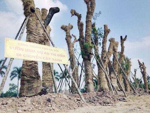 """Cận cảnh khu vườn nghỉ dưỡng của các """"cụ cây"""" Kim Mã - 3"""