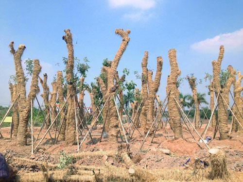 """Cận cảnh khu vườn nghỉ dưỡng của các """"cụ cây"""" Kim Mã - 2"""